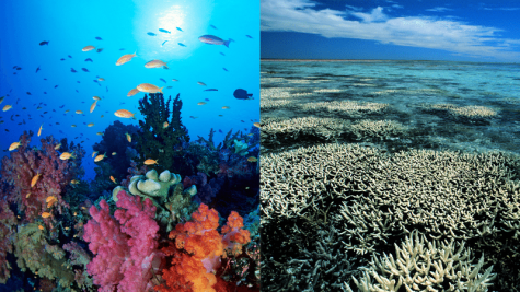 Bye bye, coral reefs